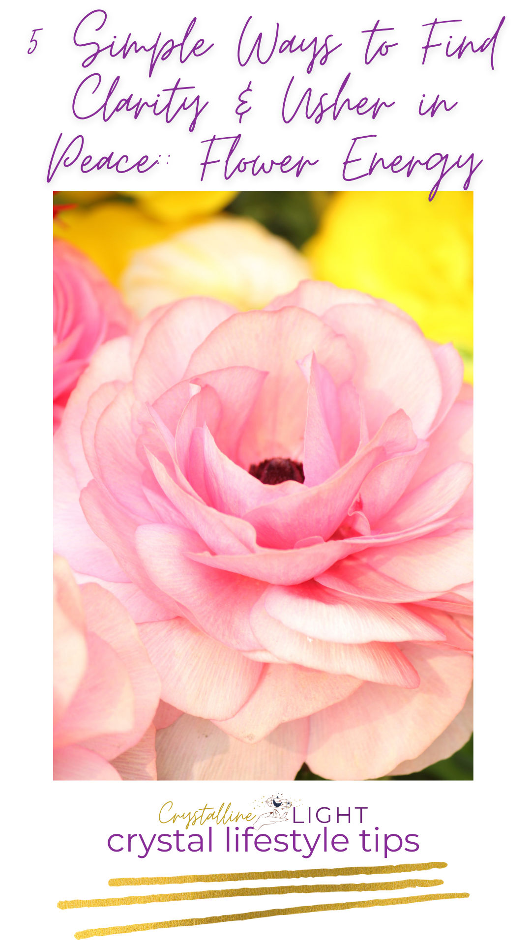 5 Simple Ways to Find Clarity & Usher In Peace: Flower Energy
