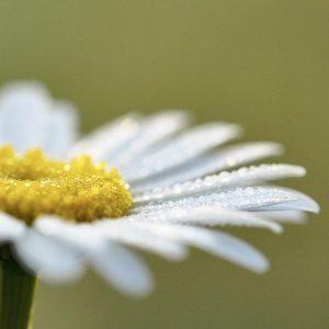 _whiteflower